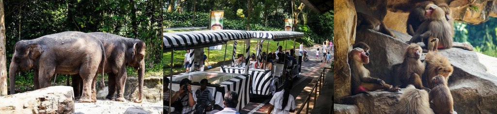 zoo singapure